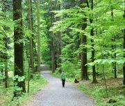 Walking-Croatian-National-Parks-Risnak