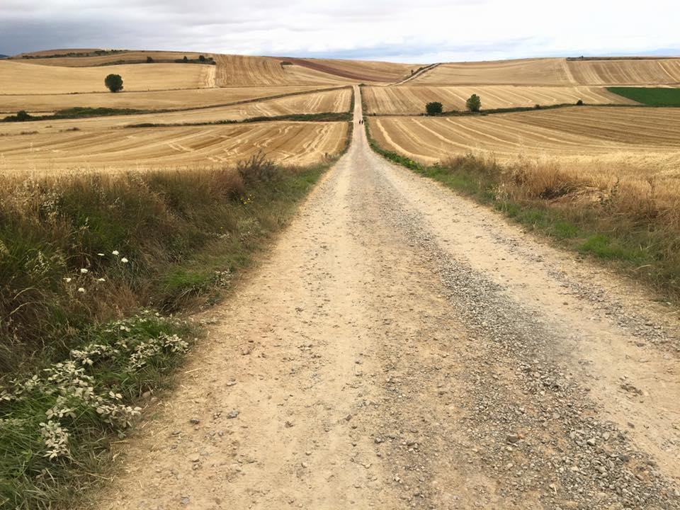 wheat fields, camino